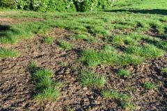 Sjuka gräsmattor Arkivbilder