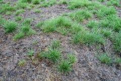 Sjuka gräsmattor royaltyfri fotografi