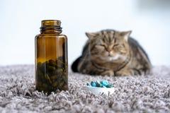 Sjuka kattmediciner för sjuka piller som spiller ut ur flaskan royaltyfri bild