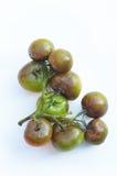 Sjuka tomater Royaltyfri Foto