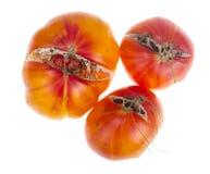 Sjukdomar och skada på tomatfrukter arkivfoton