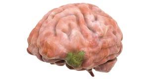 Sjukdomspridning på hjärna, animering 3d tolkning som 3D isoleras på vit bakgrund