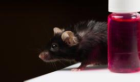 Sjukligt fet mus på rörkuggen Royaltyfria Foton