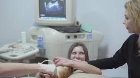 Sjuksköterskan rymmer hunden tafsar, medan doktorn gör ultraljudet Ägare av den djura smekningen hennes husdjur som lugnar honom  lager videofilmer