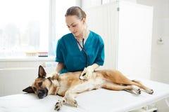 Sjukvård av hunden arkivfoto