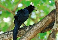 sjunga för fågel Arkivbilder