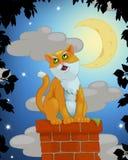 Sjungande katt Royaltyfri Fotografi