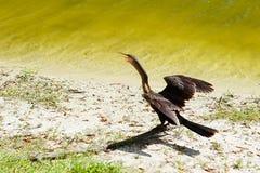 sjungande tie för fågelbrösthjärta Royaltyfri Fotografi