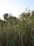 Sjunka in i gräsplan Royaltyfria Bilder