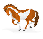 Skäckig häst Arkivfoto