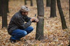 Skäggig botaniker som studerar den skadade trädstammen i höstför Arkivfoton