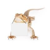 Skäggiga Dragon Carrying Blank Sign Arkivfoton