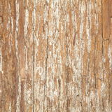 Skäll av almen. Sömlös Tileable textur Arkivfoton