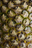 Skäll av ananas Royaltyfri Bild