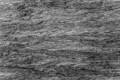 Skäll av cypressen royaltyfri bild