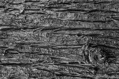 Skäll av cypressen arkivbilder