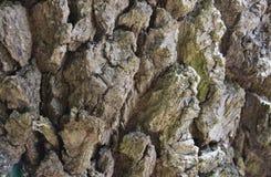 Skäll av en gammal tree Royaltyfria Bilder