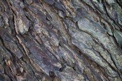 Skäll av en olivträd Natur foto royaltyfri bild
