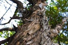 Skäll av en tree royaltyfri foto