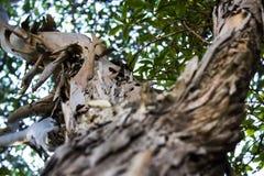 Skäll av en tree royaltyfri bild