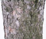 Skäll av ett sörjaträd som skapar tapeten, textur eller bakgrund Arkivbilder