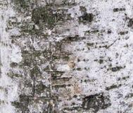 Skäll av ett sörjaträd som skapar tapeten, textur eller bakgrund Royaltyfri Bild