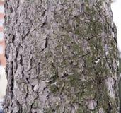 Skäll av ett sörjaträd som skapar tapeten, textur eller bakgrund Royaltyfri Foto