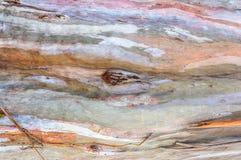 skäll av eukalyptusbakgrund royaltyfri fotografi