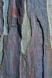 Skäll av eukalyptusträdet, textur och bakgrund Royaltyfria Bilder