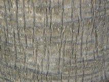 Skäll av palmträdet Arkivbilder