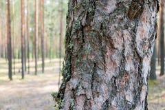 Skäll av trädet Arkivfoto