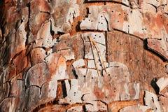 Skäll av trädet Fotografering för Bildbyråer
