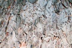 Skäll av trädet Royaltyfri Foto