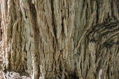 Skäll av trädet, slut upp till stammen av ett träd arkivfoto