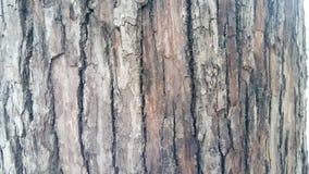 Skäll av treen Royaltyfria Bilder