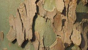 Skäll av treen Arkivbild
