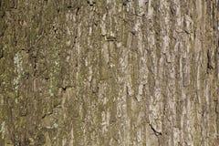 Skäll av treen Arkivbilder