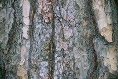 Skäll av treen royaltyfri foto