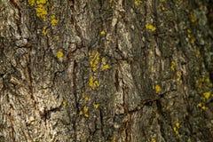 Skäll av treen abstrakt bakgrundsdesign Närbild Arkivbilder