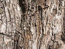 Skäll av treetextur Arkivbilder