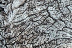 Skäll av treetextur Arkivbild