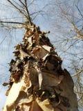 Skäll för himmel för afton för horisontfilialträd Royaltyfria Bilder
