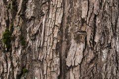 Skäll med moss Fotografering för Bildbyråer