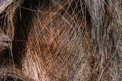 Skäll på stammen av en palmträd Royaltyfri Fotografi