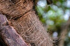 Skäll på stammen av en palmträd Royaltyfria Foton