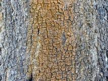Skäll på träd Arkivbilder