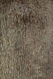 Skäll på träddetaljer Arkivfoton