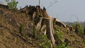 Skäll, trä och torrt land under solen arkivfilmer