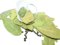 skälla den glass leafen Arkivfoton