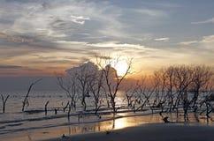 skälla den overkliga mangrovesolnedgången Arkivbild